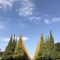 明治神宮外苑いちょう並木の写真・動画_image_280456