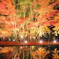 曽木公園の写真・動画_image_281147