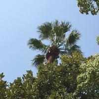 日比谷公園の写真・動画_image_308327