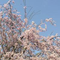 日比谷公園の写真・動画_image_308328