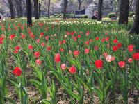 日比谷公園の写真・動画_image_308329