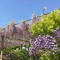 曼陀羅寺公園の写真・動画_image_312531