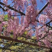 曼陀羅寺公園の写真・動画_image_312532
