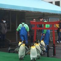 越前松島水族館の写真・動画_image_318752