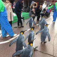 越前松島水族館の写真・動画_image_318757