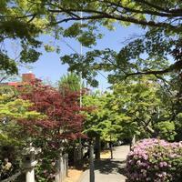 紅葉八幡宮の写真・動画_image_319235