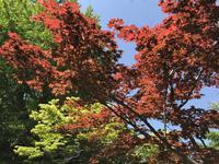 紅葉八幡宮の写真・動画_image_319247
