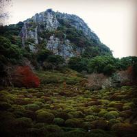 御船山楽園の写真・動画_image_320481