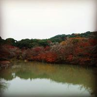 御船山楽園の写真・動画_image_320482