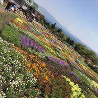 くじゅう花公園の写真・動画_image_320500