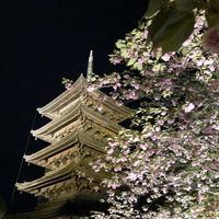東寺 五重塔の写真・動画_image_320678
