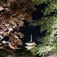 東寺 五重塔の写真・動画_image_320679