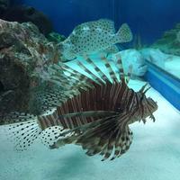 しながわ水族館の写真・動画_image_324649