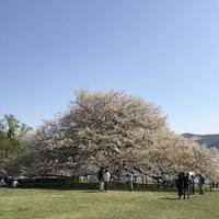 箱根園の写真・動画_image_325168