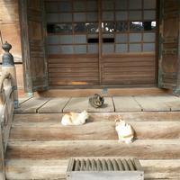 護国寺の写真・動画_image_339540