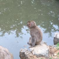 嵐山モンキーパークいわたやまの写真・動画_image_348003