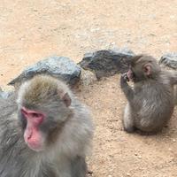 嵐山モンキーパークいわたやまの写真・動画_image_348004