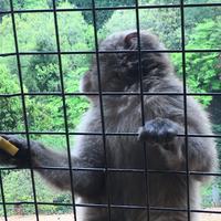 嵐山モンキーパークいわたやまの写真・動画_image_348005