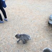 嵐山モンキーパークいわたやまの写真・動画_image_348007