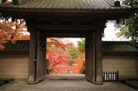 円覚寺の写真・動画_image_407408