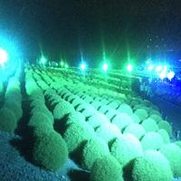 国営ひたち海浜公園の写真・動画_image_408309