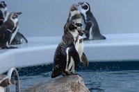 しまね海洋館アクアスの写真・動画_image_416391