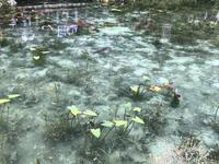 モネの池の写真・動画_image_433459