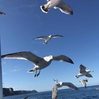 水中展望船ニューしゃこたん号の写真・動画_image_441454