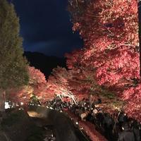もみじ回廊の写真・動画_image_457248