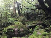 白谷雲水峡の写真・動画_image_486490