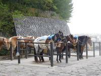 富士山5ごうめの写真・動画_image_486792