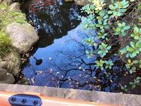 千葉神社の写真・動画_image_489651
