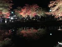 曽木公園の写真・動画_image_530850