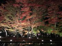 曽木公園の写真・動画_image_530851