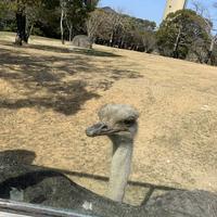豊橋総合動植物公園 (のんほいパーク)の写真・動画_image_533583