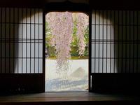 高台寺の写真・動画_image_546394