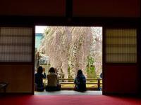 高台寺の写真・動画_image_546395