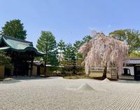 高台寺の写真・動画_image_546396