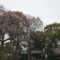 神明宮の写真・動画_image_548121