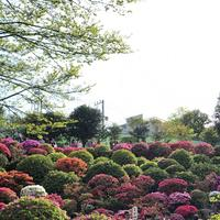根津神社の写真・動画_image_554013