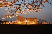 石舞台古墳の写真・動画_image_555057