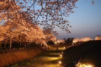 石舞台古墳の写真・動画_image_555058