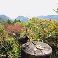 金峰山の写真・動画_image_558143