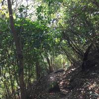 金峰山の写真・動画_image_558146