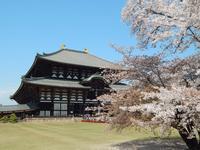 東大寺の写真・動画_image_564633