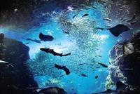 新江ノ島水族館の写真・動画_image_569322
