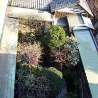 朝倉彫塑館の写真・動画_image_573847