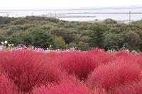 国営ひたち海浜公園の写真・動画_image_586445