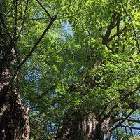 赤坂氷川神社の写真・動画_image_600393