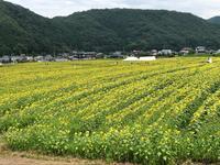 南光ひまわり畑の写真・動画_image_617379